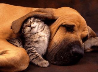 pet-image-for-website